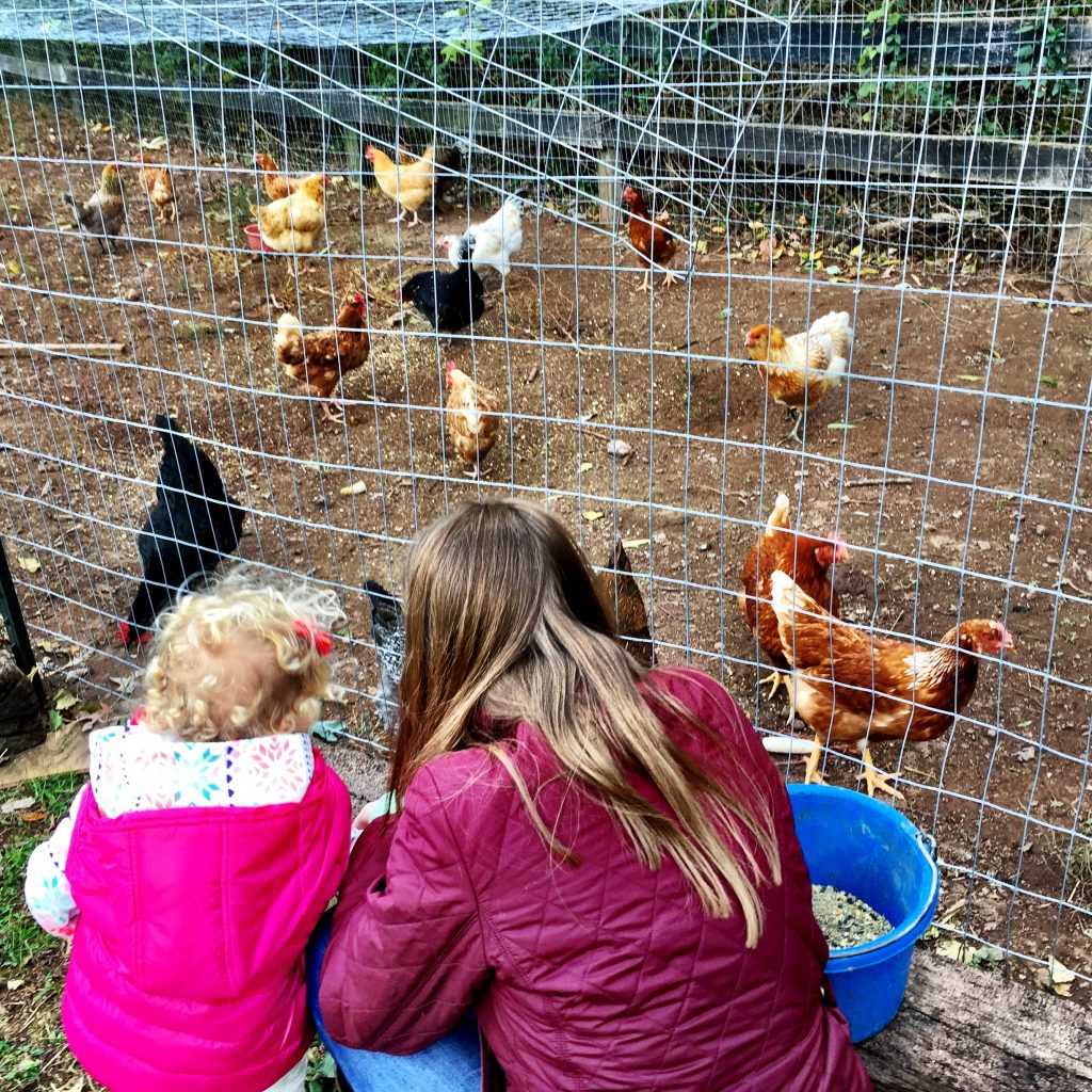 EF got to feed some chickens